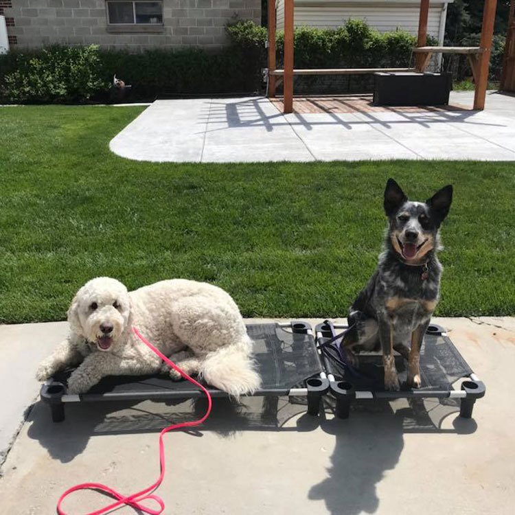 Dog Boarding & Training